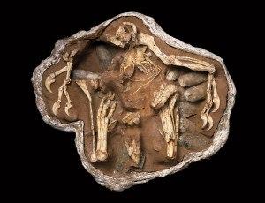 Fossilized Oviraptor brooding her nest