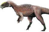 a shaggy-feathered theropod