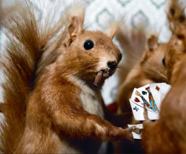 card playing squirrel single
