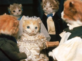 cat wedding
