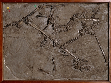 NaturalHistoryMuseum_PictureLibrary_004719_preview dimorphodon