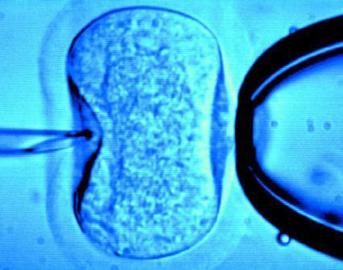 in-vitro