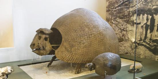 glyptodonts_dynamic_lead_slide
