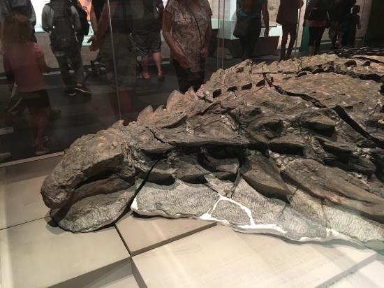 new nodosaur
