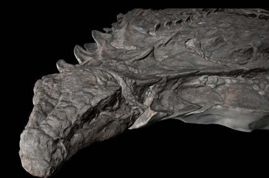 newnodosaur natgeo3D