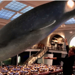 Blue Whales and ButteredToast